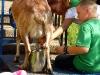 10-15-2011-serbian-food-festival-038