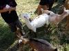 10-15-2011-serbian-food-festival-043