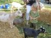 10-15-2011-serbian-food-festival-050_0
